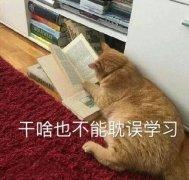 雅思写作:雅思大作文怎么写?你